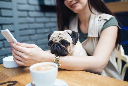 ミレニアル世代とペットについて:異常な関係とは?