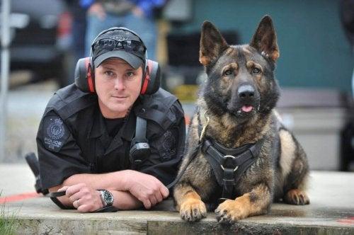 警察犬ダンコの引退 警察犬 ダンコ