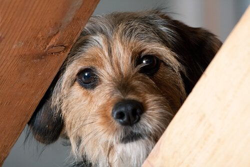 物陰から覗く犬 犬 正義感