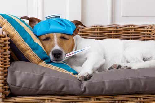 犬の体温を正しく確認しよう!体温計を使う時のポイント