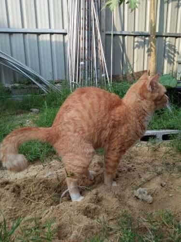 猫の便秘 ペット 便秘