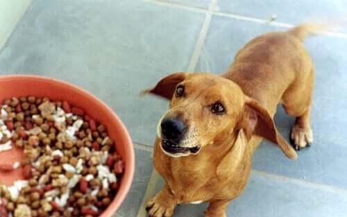 エサを待つ犬 犬 フルーツ 野菜