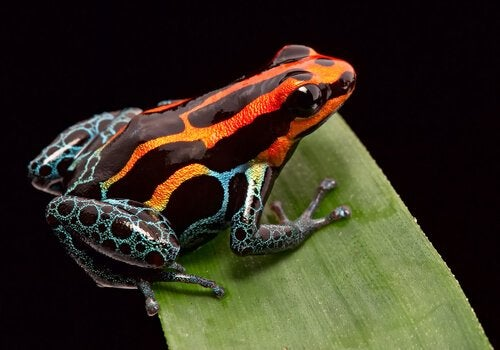 警戒色を持つ生き物:警戒色はどう機能するのか?