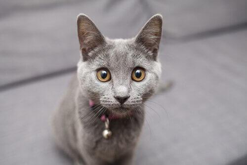 見つめる猫 猫 マッサージ