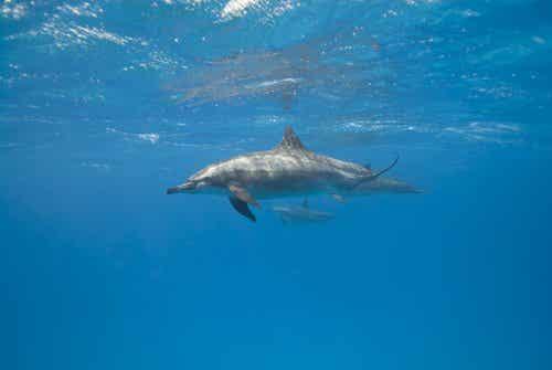 イルカはどうやって寝ているの?:海洋性哺乳類の睡眠習慣