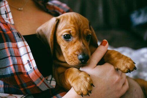 子犬に必要な基礎トレーニングについてのアドバイス