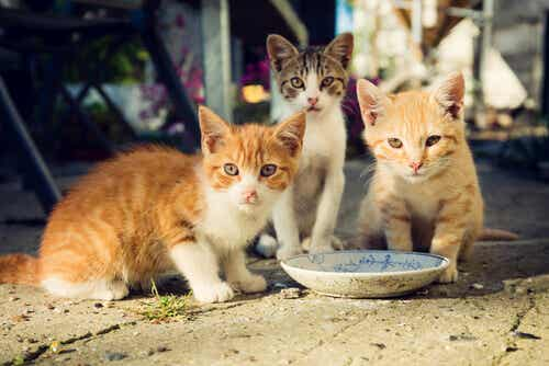 猫のコロニーを見つけた時に正しく餌やりをする方法