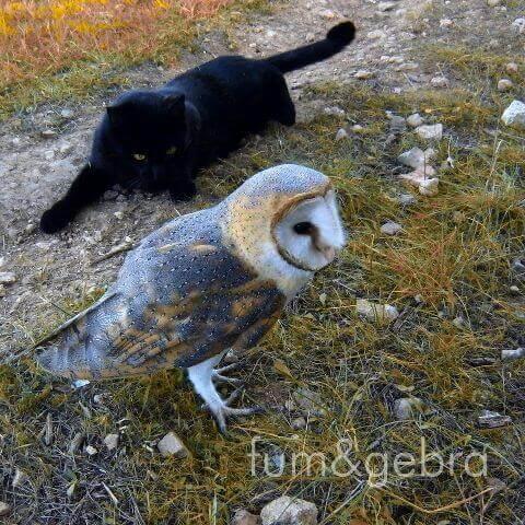 動物同士の友情猫とフクロウ 動物 友情