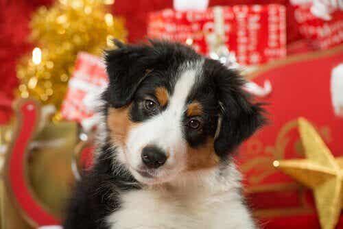 ペットと過ごす初めてのクリスマス:注意するポイントは?