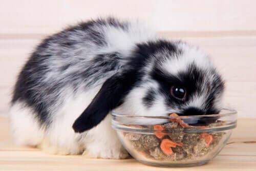 ドワーフウサギの餌2