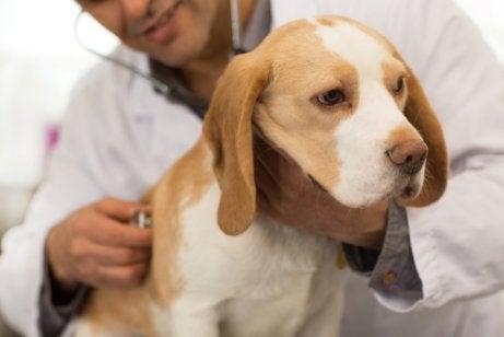獣医と犬 寄生虫 犬
