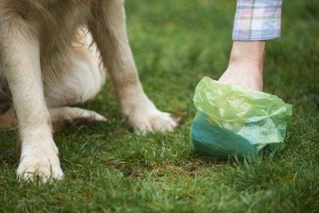 犬のウンチ袋 サルモネラ 犬 感染