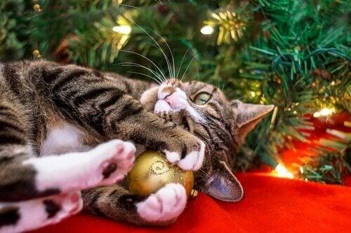 ペット クリスマス