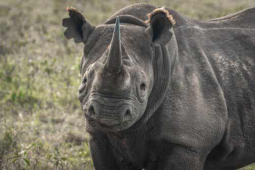 世界から消え去ってしまう?絶滅寸前と言われている動物たち5種