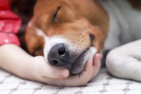 病気の犬 犬ジステンパー 症状 治療法 原因