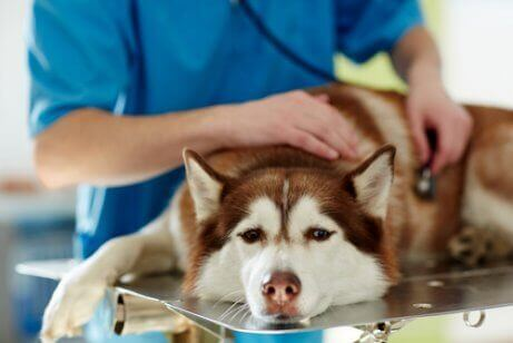 動物病院で診察 犬ジステンパー 症状 治療法 原因