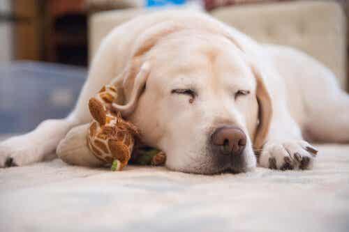 愛犬の寝つきが悪くなってしまったときの対処法とは?
