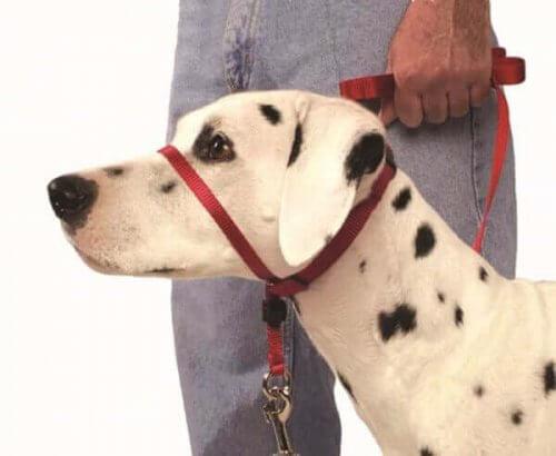 しつけに効果的!犬用ヘッドカラーを正しく使う方法