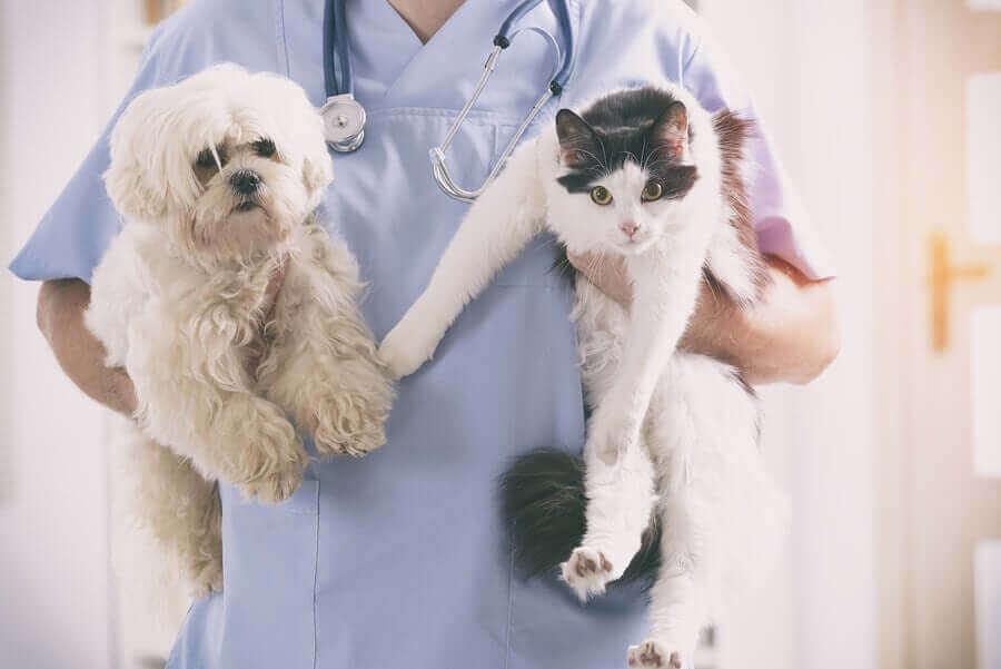 動物を保護した獣医師