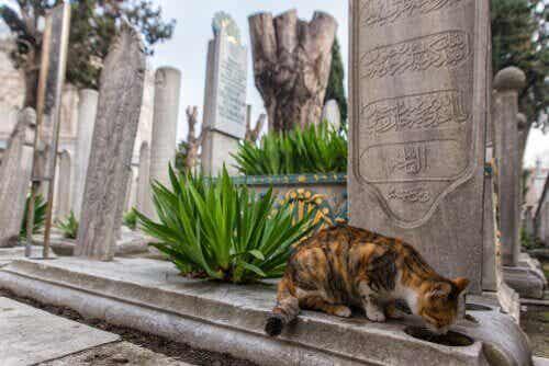 何世紀にも渡る歴史:猫のあふれる街イスタンブール