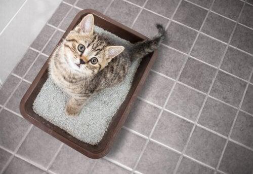 猫トイレに座る猫 猫 トイレトレーニング
