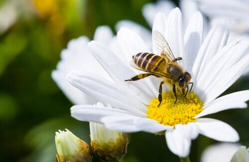 ハチがいないと地球上に生命体が存続できないかもしれない