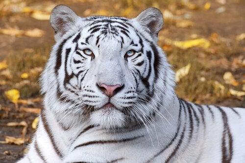 何を表してるの?風水で使われる動物たち 虎