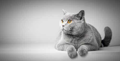 ボディランゲージでわかる猫の気持ちを見てみよう