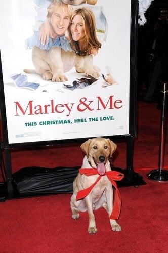 マーリー 犬 映画