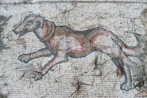 かつては存在したワンちゃんたち!絶滅した犬種について