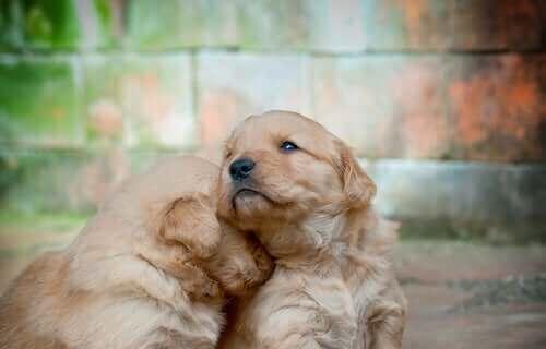子犬の感情 犬 感情 泣く