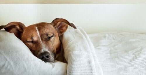 腹痛に苦しむ犬 犬の腹痛 兆候 症状