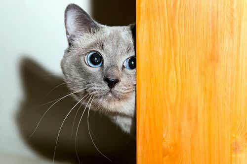 愛情?忍耐?猫と信頼関係を築く方法が知りたい!