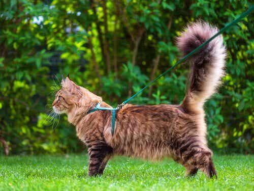 ネコのしっぽが私たちに伝えていることを考える!