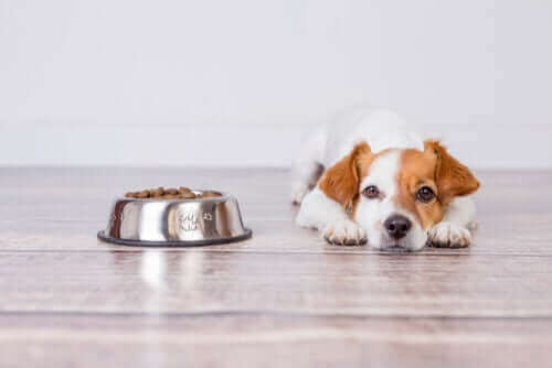 老犬 シニア犬 食事