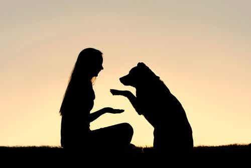 体罰を使わない犬のポジティブ・トレーニングについて