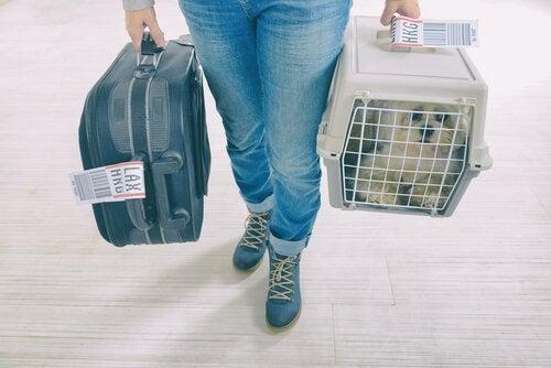 ペットと長期休暇 キャリーに入った犬を連れた旅行者