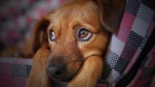 犬インフルエンザの感染経路は?予防と治療について