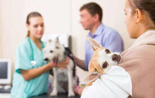 ロックダウン中に獣医さんに救急で行くべき状況を知ろう