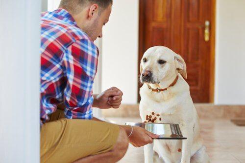 犬に餌をあげる飼い主 腎不全 犬 シニア犬