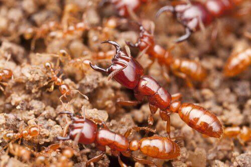 世界の危険な昆虫たち:地球上で最も多様な生物!