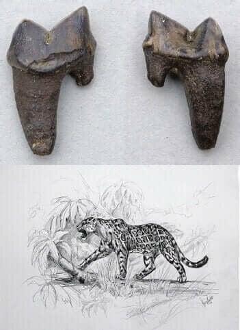 ヨーロッパライオン 絶滅 ネコ科 野生動物
