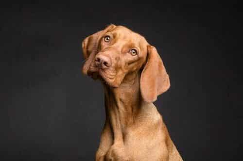 【毛並み改善!】皮膚と被毛に影響する犬の食事について