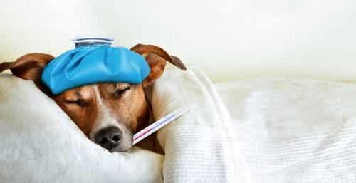【万全の対策を】ペットのインフルエンザ感染を予防するには?
