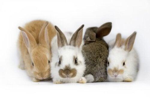 【耳の中の器官が病気になっちゃった?】ウサギの前庭疾患について