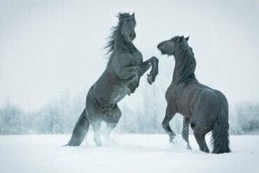 【シベリアで驚きの発見!】氷に閉ざされた先史時代の馬