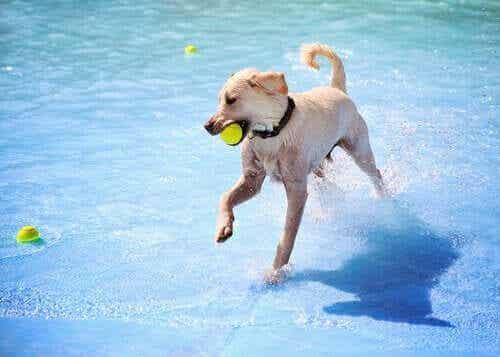 愛犬と楽しめるスペインのウォーターパーク2選