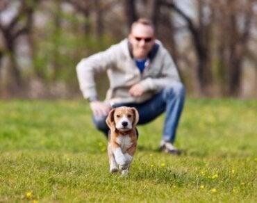 【愛犬が逃走!】散歩中に愛犬が逃げ出さないようにするには