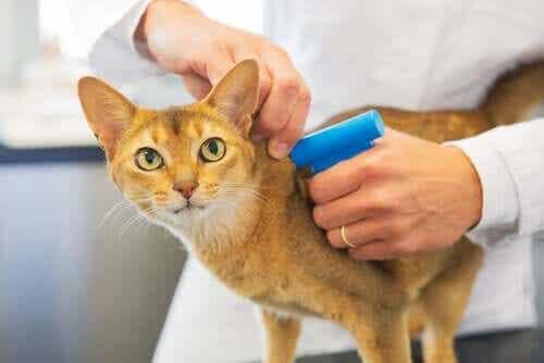 【セキュリティ問題?】猫のマイクロチップ装着は義務化されている?