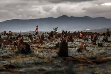 アフリカ パーム油 環境 健康 害